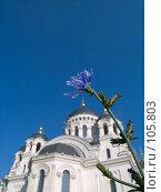 Купить «Цветок цикория на фоне Вознесенского войскового собора Новочеркасска», фото № 105803, снято 28 июля 2006 г. (c) Борис Панасюк / Фотобанк Лори