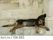 Купить «Собака спит», фото № 106883, снято 25 сентября 2007 г. (c) Корчагина Полина / Фотобанк Лори