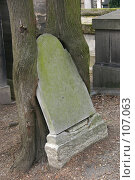 Купить «Могильный камень вросший в деревья на кладбище Пер Лашез, Париж, Франция», фото № 107063, снято 26 февраля 2006 г. (c) Harry / Фотобанк Лори