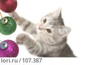 Купить «Серая кошка играет с  новогодними игрушками», фото № 107387, снято 19 октября 2007 г. (c) Останина Екатерина / Фотобанк Лори