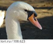 Купить «Лебедь», фото № 108623, снято 27 октября 2007 г. (c) Карелин Д.А. / Фотобанк Лори