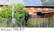 Осторожно! Злая собака! (Сторожевая собака, следящая за прохожими из-за забора на фоне домовладения) Стоковое фото, фотограф Александр Чураков / Фотобанк Лори