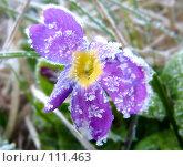 Купить «Первые осенние заморозки», фото № 111463, снято 6 мая 2007 г. (c) Parmenov Pavel / Фотобанк Лори