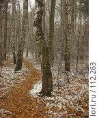 Купить «Желтый путь», фото № 112263, снято 4 ноября 2007 г. (c) Анна Финютина / Фотобанк Лори
