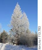 Купить «Зимний лес», фото № 113783, снято 9 ноября 2007 г. (c) Владимир Ильин / Фотобанк Лори