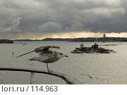 Купить «Чайка на фоне залива», фото № 114963, снято 23 мая 2018 г. (c) Игорь Соколов / Фотобанк Лори