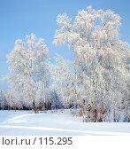 Купить «Морозный день», фото № 115295, снято 13 ноября 2019 г. (c) Владимир Мельников / Фотобанк Лори