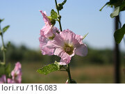 Купить «Цветок», фото № 116083, снято 11 августа 2007 г. (c) Т.Кожевникова / Фотобанк Лори
