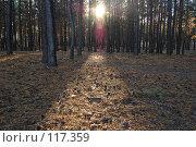 Купить «Закат в сосновом лесу», фото № 117359, снято 4 ноября 2007 г. (c) Арестов Андрей Павлович / Фотобанк Лори