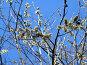 Весна, фото № 117743, снято 27 июля 2017 г. (c) Бяков Вячеслав / Фотобанк Лори