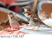 Купить «Воробьи за завтраком», фото № 118147, снято 22 июля 2007 г. (c) Ирина Крамарская / Фотобанк Лори