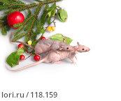 Купить «Две голые и лысые крысы встречают новый год», фото № 118159, снято 23 сентября 2007 г. (c) Иван / Фотобанк Лори