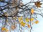 Осенние листья каштана на фоне голубого неба, эксклюзивное фото № 118775, снято 28 июля 2017 г. (c) Татьяна Белова / Фотобанк Лори