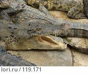 Купить «Крокодил с открытой пастью», фото № 119171, снято 25 марта 2007 г. (c) Колчева Ольга / Фотобанк Лори