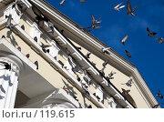 Купить «Голуби на центральном соборе г. Кишинева», фото № 119615, снято 26 декабря 2006 г. (c) Сергей Старуш / Фотобанк Лори