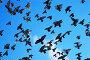 Летящие голуби, фото № 119711, снято 26 декабря 2006 г. (c) Сергей Старуш / Фотобанк Лори