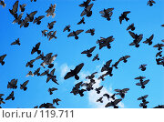 Купить «Летящие голуби», фото № 119711, снято 26 декабря 2006 г. (c) Сергей Старуш / Фотобанк Лори