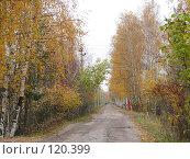 Купить «Осенний проселок», фото № 120399, снято 22 октября 2007 г. (c) Иван / Фотобанк Лори