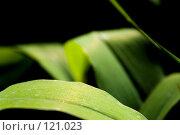 Купить «Солнечный свет в лесу», фото № 121023, снято 10 июня 2007 г. (c) Coler / Фотобанк Лори