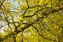 Осенние ветви, фото № 121503, снято 22 сентября 2007 г. (c) Петухов Геннадий / Фотобанк Лори