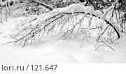 Купить «Снежная зима», фото № 121647, снято 17 ноября 2007 г. (c) Анатолий Теребенин / Фотобанк Лори