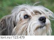 Купить «Взъерошенный пес», фото № 123479, снято 17 сентября 2006 г. (c) Коваль Василий / Фотобанк Лори