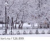 Купить «Городской парк в снегу», фото № 126899, снято 16 ноября 2007 г. (c) Ольга Хорькова / Фотобанк Лори