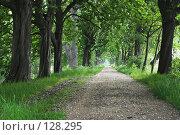 Купить «Аллея  (тенистая)», фото № 128295, снято 11 мая 2004 г. (c) hunta / Фотобанк Лори