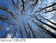 Купить «Взгляд вверх. Look Up!», фото № 130279, снято 6 мая 2006 г. (c) Serg Zastavkin / Фотобанк Лори