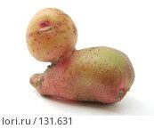 Купить «Картофельная улитка», фото № 131631, снято 8 июля 2007 г. (c) Иван / Фотобанк Лори