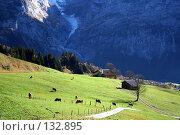Купить «Альпийские луга. Швейцария.», фото № 132895, снято 29 сентября 2006 г. (c) Николай Коржов / Фотобанк Лори