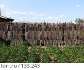 Купить «Забор из частокола», фото № 133243, снято 1 августа 2007 г. (c) A.Козырева / Фотобанк Лори