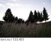 Купить «Ели в поле», фото № 133451, снято 21 сентября 2007 г. (c) Бяков Вячеслав / Фотобанк Лори