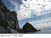 Купить «Скалы, море, чайки», фото № 133767, снято 27 июня 2006 г. (c) Николаенко Алексей / Фотобанк Лори