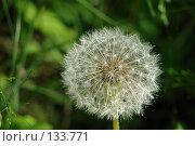Купить «Одуванчик», фото № 133771, снято 15 июля 2006 г. (c) Николаенко Алексей / Фотобанк Лори