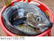 Морская рыба в тазу. Стоковое фото, фотограф Николаенко Алексей / Фотобанк Лори
