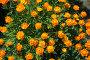 Цветы сибири, фото № 135151, снято 5 июня 2006 г. (c) Serg Zastavkin / Фотобанк Лори