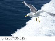 Купить «Чайка над морем», фото № 136315, снято 18 декабря 2007 г. (c) Сергей Тундра / Фотобанк Лори