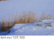 Купить «Камышовые заросли в снегу», фото № 137103, снято 1 декабря 2007 г. (c) Михаил Николаев / Фотобанк Лори