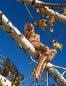 Блондинка на дереве, фото № 138291, снято 18 сентября 2005 г. (c) Serg Zastavkin / Фотобанк Лори