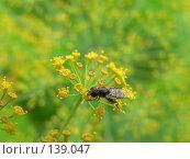 Насекомое на цветке. Стоковое фото, фотограф Андреева Анастасия / Фотобанк Лори