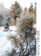 Купить «Лесной зимний пейзаж», фото № 139235, снято 5 декабря 2007 г. (c) Круглов Олег / Фотобанк Лори