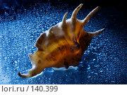 Купить «Морская ракушка», фото № 140399, снято 6 декабря 2007 г. (c) Юлия Сайганова / Фотобанк Лори