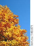 Купить «Золотое дерево», фото № 140871, снято 23 сентября 2007 г. (c) Анатолий Теребенин / Фотобанк Лори
