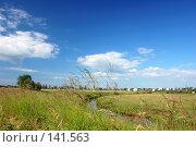 Купить «Поле. Синее небо с облаками», фото № 141563, снято 24 июня 2007 г. (c) Катыкин Сергей / Фотобанк Лори