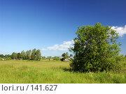 Купить «Поле. Синее небо с облаками», фото № 141627, снято 24 июня 2007 г. (c) Катыкин Сергей / Фотобанк Лори