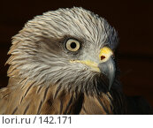 Купить «Символ свободы», фото № 142171, снято 27 октября 2007 г. (c) Карелин Д.А. / Фотобанк Лори