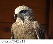 Купить «Хищник», фото № 142211, снято 27 октября 2007 г. (c) Карелин Д.А. / Фотобанк Лори
