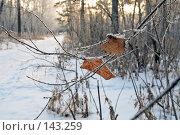 Купить «Закат в зимнем лесу», фото № 143259, снято 5 декабря 2007 г. (c) Круглов Олег / Фотобанк Лори