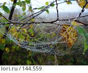 Купить «Осень. Паутина с капельками дождя», фото № 144559, снято 23 сентября 2007 г. (c) Михаил Коханчиков / Фотобанк Лори